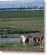 Three Horses Metal Print