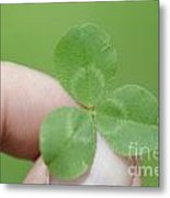 Three Leaf Clover In A Hand Metal Print