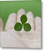 Three Leaf Clover Metal Print