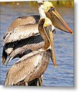 Three Pelicans On A Stump Metal Print
