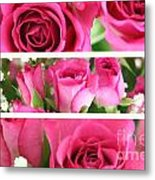 Three Pink Roses Landscape Metal Print