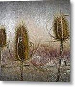 Three Prickly Teasels Metal Print