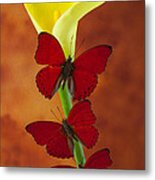 Three Red Butterflies On Calla Lily Metal Print