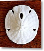 Three Sand Dollars Metal Print