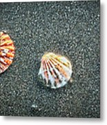 Three Sea Shells Metal Print