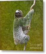 Three-toed Sloth Climbing Metal Print by Heiko Koehrer-Wagner