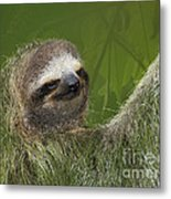 Three-toed Sloth Metal Print