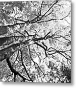 Three Trees Reach For The Sky Black And White Metal Print