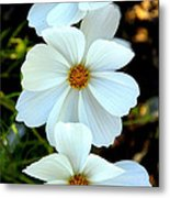 Three White Flowers Metal Print