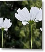 Three Wildflowers Metal Print