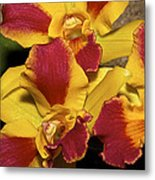 Three Yellow And Red Orchids Metal Print