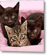 Threee Kittens In A Pink And White Basket Metal Print