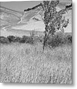 Through The Tall Grasses Metal Print