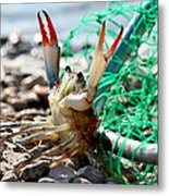 Crab Throw Me Something Mister Metal Print