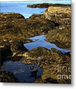 Tidepool In Maine Metal Print