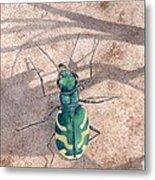 Tiger Beetle Metal Print