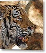 Tiger De Metal Print by Ernie Echols