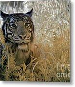 Tiger In Infrared Metal Print