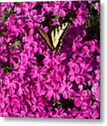 Tiger In The Phlox 5 Metal Print