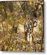 Tiger In The Undergrowth At Ranthambore Metal Print