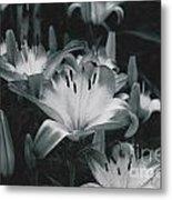 Tiger Lilies Metal Print
