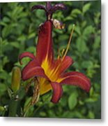 Tiger Lilly Metal Print