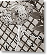 Tiger Lily And Rusty Gate Metal Print