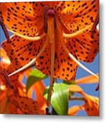 Tiger Lily Close Up Metal Print