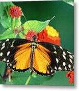 Tiger Longwing Heliconius Hecale Metal Print