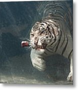Tiger Shark Metal Print by Buck Forester