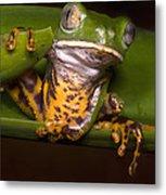 Tiger-stripe Monkey Frog Metal Print