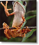 Tiger Striped Leaf Frog Waving Metal Print