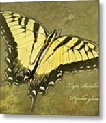 Tiger Swallowtail Butterfly - Papilio Glaucas Metal Print