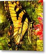 Tiger Swallowtail Butterfly Happily Feeds Metal Print