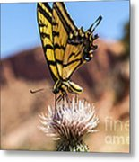Tiger Swallowtail Butterfly In The Desert Metal Print