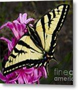 Tiger Swallowtail On Pink Hyacinth Metal Print