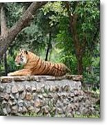 Tiger Tiger Burning Bright Metal Print