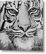 Tiger's Eyes Metal Print
