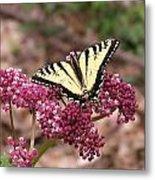 Tigertale Butterfly Metal Print
