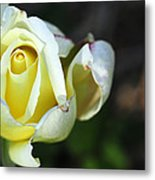 Tightly Woven Metal Print