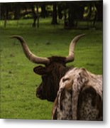 Till The Cow Comes Home Metal Print