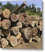 Timber At A Logging Area, Danum Valley Metal Print