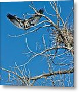 Time To Nest Metal Print