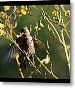Tiny Bird In Wild Lettuce  Metal Print