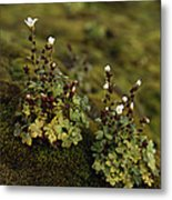 Tiny Flowering Plant Grows In Moss Metal Print