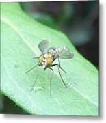 Tiny Fly Metal Print