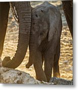 Tiny Trunk Metal Print