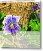 Tiny Violet   Blank Greeting Card Metal Print