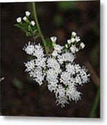 Tiny Wild Flowers Metal Print