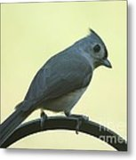 Titmouse On A Perch Metal Print